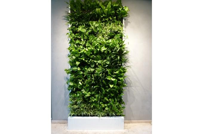 ... Interior Green Wall ...