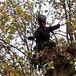 Tree Cutting & Stump Grinding