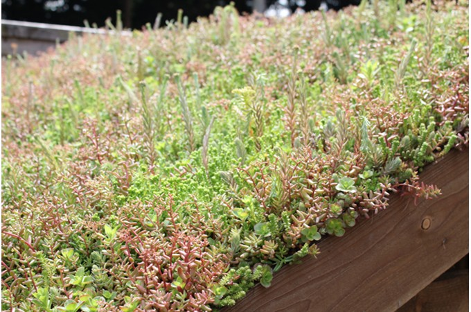 Different Aspects Ltd Green Roof Systems And Green Roofs